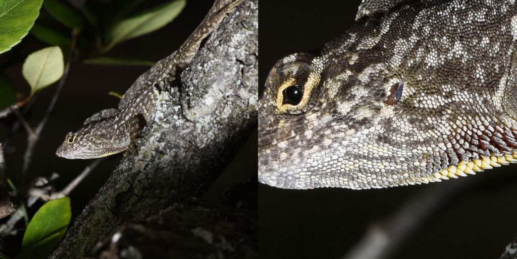 Scales on a lizard
