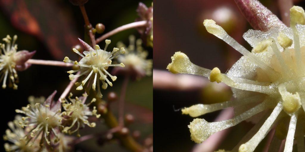 Close up on flower pollen